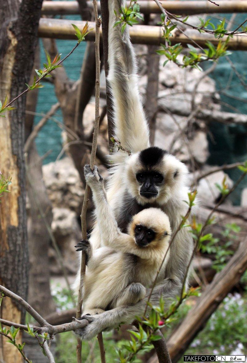 北京动物园300多新生宝宝亮相 未来两三月将迎产子高峰