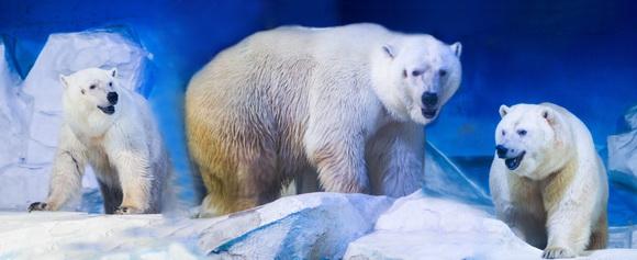 北极熊1_调整大小