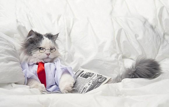 俄罗斯摄影师拍动物模仿人类萌照