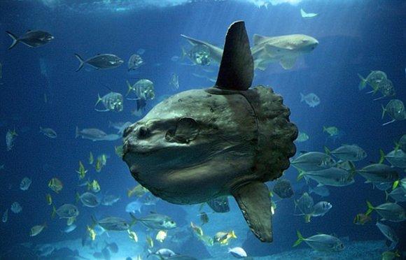 盘点十大最怪异海洋生物:外形奇特如怪兽