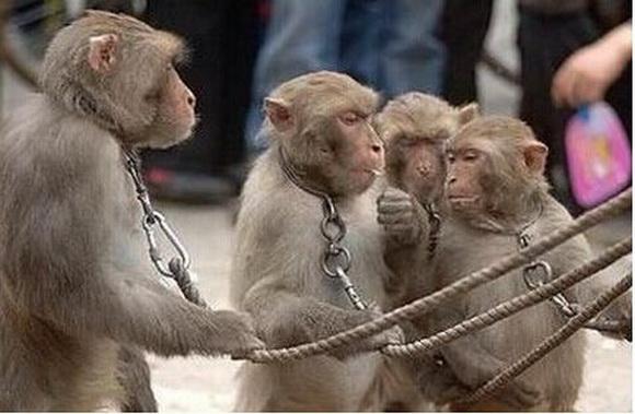 """这下倒好,遇到保护野生动物的牡丹江森林公安局,好好的猴子给""""保护""""死"""