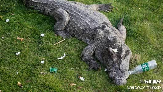 长沙生态动物园禁投喂动物 鹦鹉吃花生鳄鱼嘴边有话梅