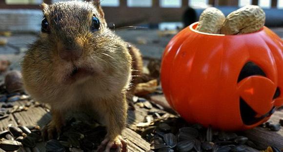 这个facebook网页上有许多可爱照片,包括松鼠,金花鼠以及鸟类储存过冬