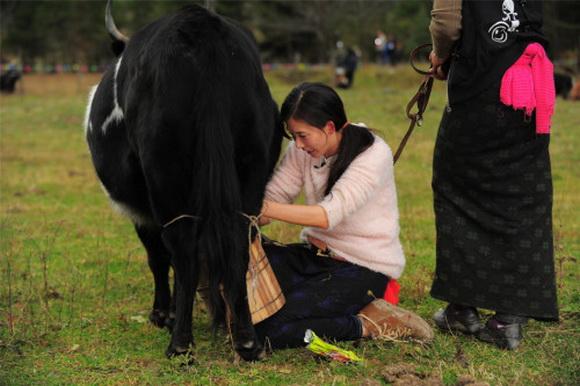 《囍从天降》林志玲素颜变村妇:女神跪地挤牛奶