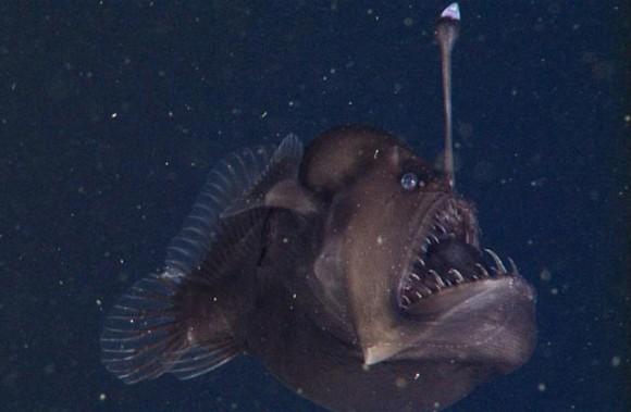 深海美杜莎是什么动物