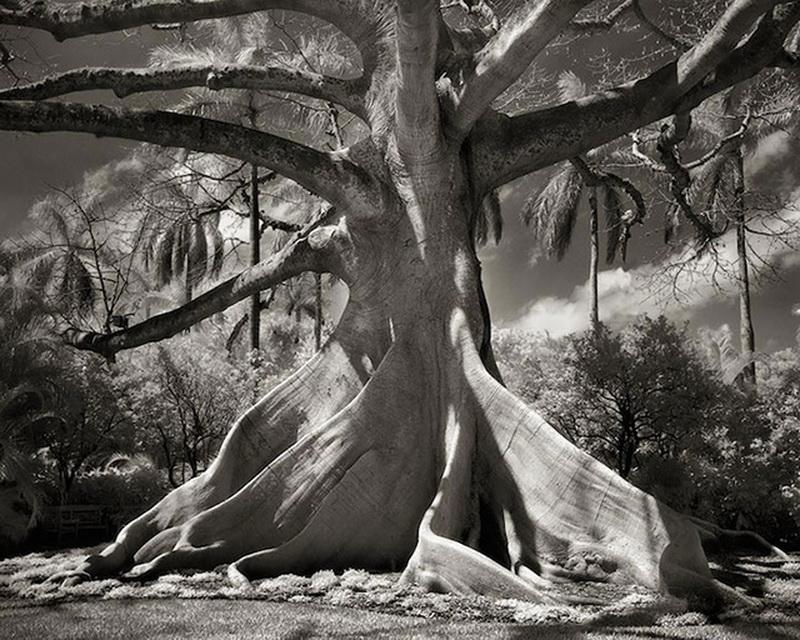 拍14年的古树