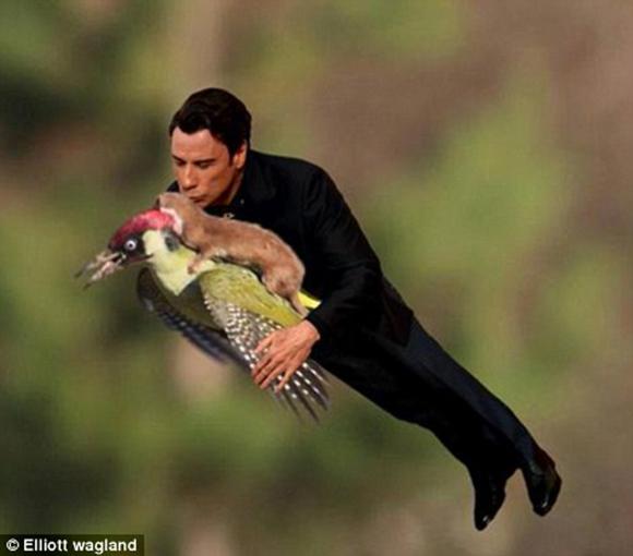 摄影师罕见拍到黄鼠狼飞骑啄木鸟 网友神级ps让魔法师