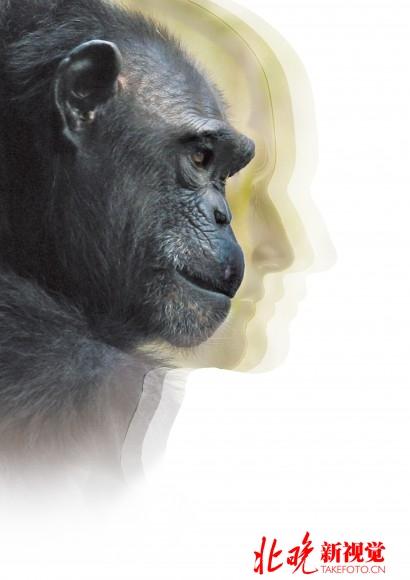 盘点最聪明的10种动物:人类被列为首位