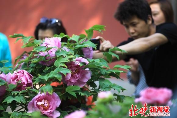 第十九届景山牡丹文化艺术节3
