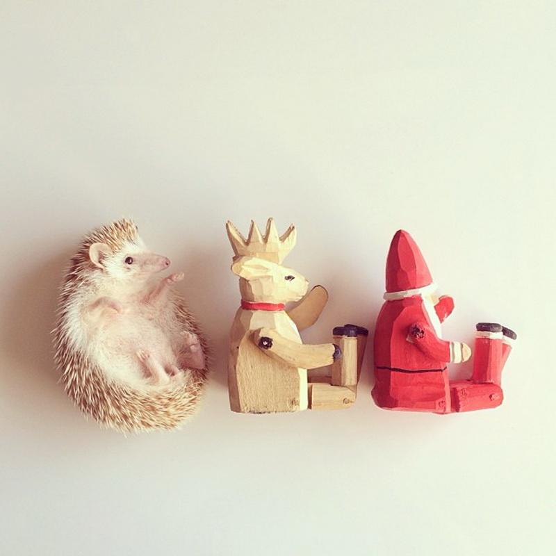 废物利用手工制作动物小刺猬