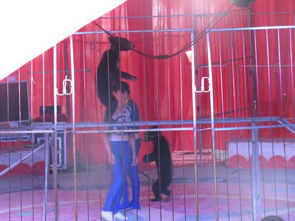 觉得马戏团里的动物太可怜
