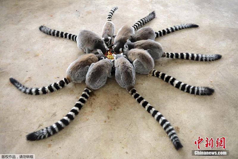 青岛野生动物世界里