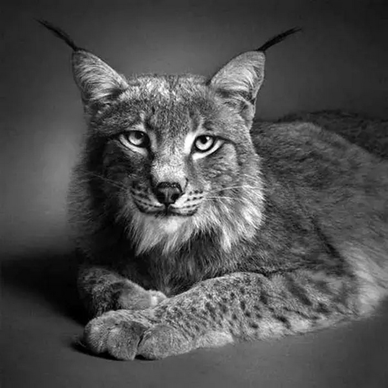 动物铅笔画简单的图片大全