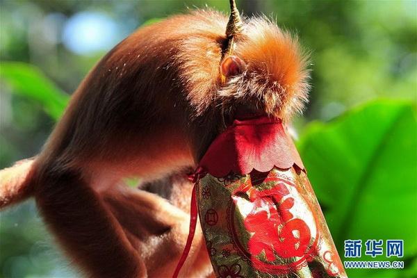 新加坡动物园猴子贺新春