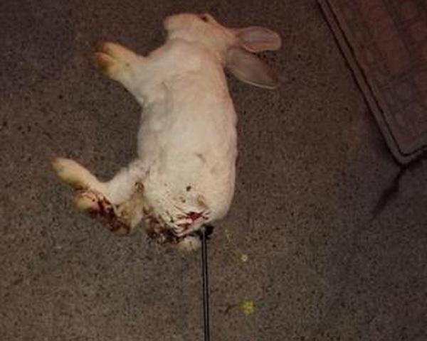 小学生当街杀白兔动物狠插小屁股弓箭数十次a白兔至极黑猩猩打败金刚图片