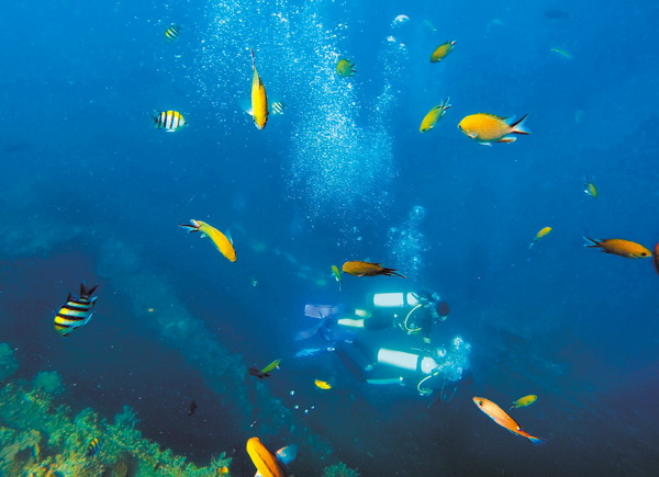 图蓝本是著名潜水胜地,卡姐也成为潜水圈儿里的幸运儿,能时刻在海底沉船与断崖间畅游。  Alex是个技术控,请来村民帮忙把他设计的水泥墩架放入海中。这样一来,潜水者就可以通过与院子里相连的钢索像人猿泰山那样溜索入海。  每天傍晚,卡姐都会和Alex出门遛狗,和潜水一样,是他们生活的一部分。  教练Meg在花园泳池内为RAID OW学员做海潜前的培训,如果基础不过关就只能玩体验潜水。  这两年中国游客经常会慕名来到不在旅游热点的秘密花园,卡姐经常到前台后厨帮忙。  清晨,潜店员工在清理泳池。经过两