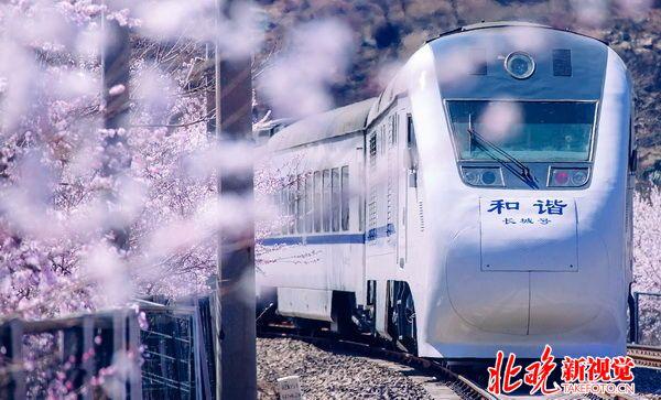 动物火车环境图片