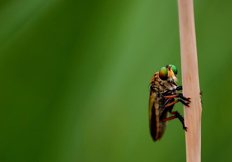 十大最可爱的昆虫