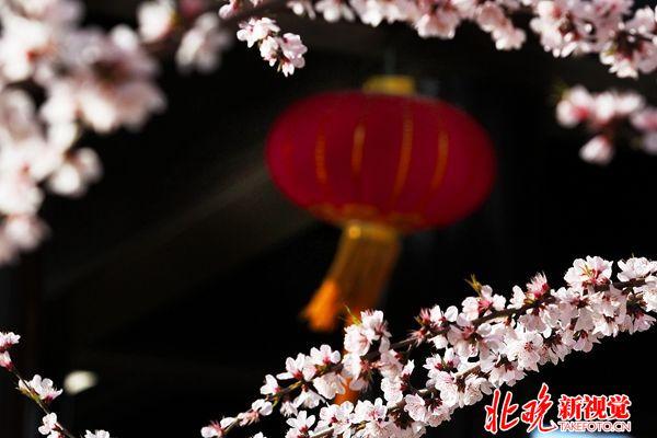 04现代北京-西城春色+姜真_副本