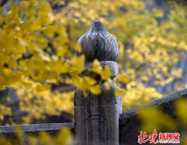 06古典yahu999-千年银杏变黄时+甄竞_副本
