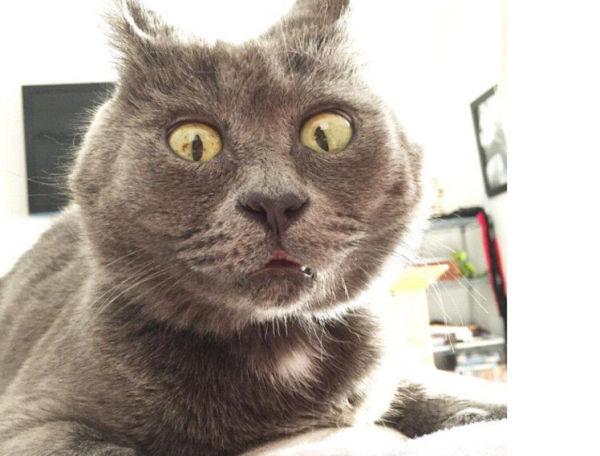 网友:可爱之猫必有可怜之处