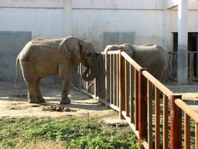 北京动物园非洲象第三次当妈