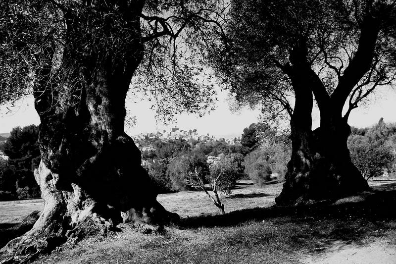 """""""遇见橄榄树下的雷诺阿""""全球巡展亮相北京"""