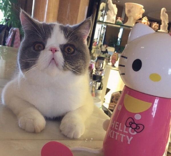 李晨含蓄秀恩爱 猫咪一脸无辜的表情:这个锅我不背