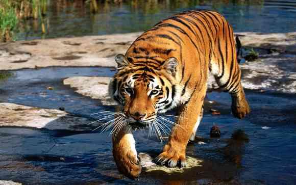 两女游客在八达岭野生动物园遭老虎袭击 1死1伤