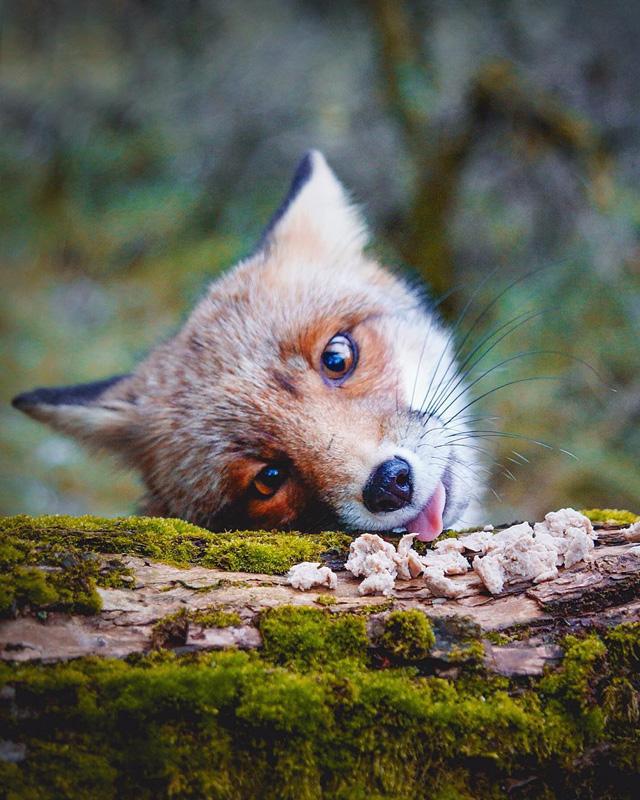 手机拍摄的野生小动物