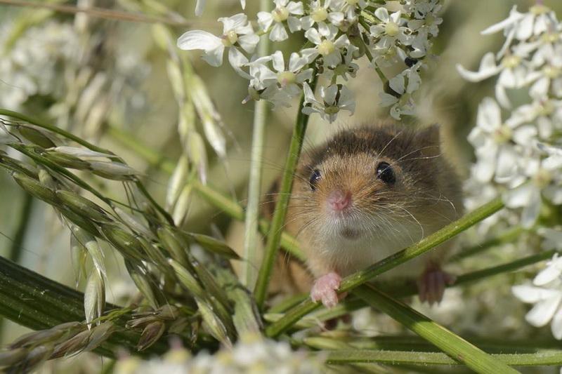 2016年度野生动物摄影大赛公布获奖作品