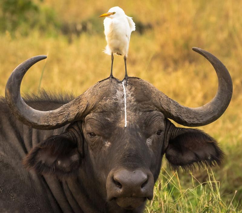 第二届搞笑野生动物摄影比赛2016年获奖作品欣赏