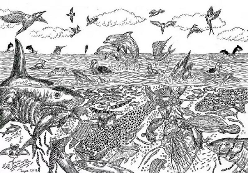 11岁的天才小画家 作品精细堪比百科图鉴