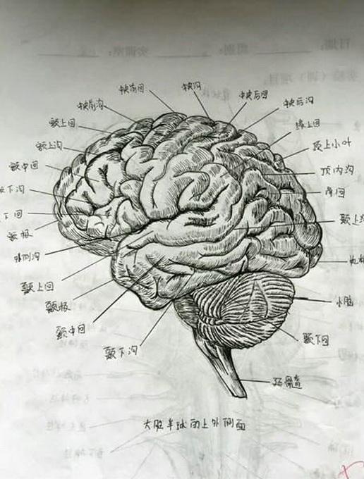 女大学生为记住人体结构手绘解剖图 网友:像印出来的