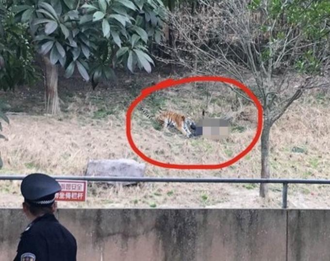 农博雅戈尔动物园发生老虎咬人事件 来自:甬派客户端