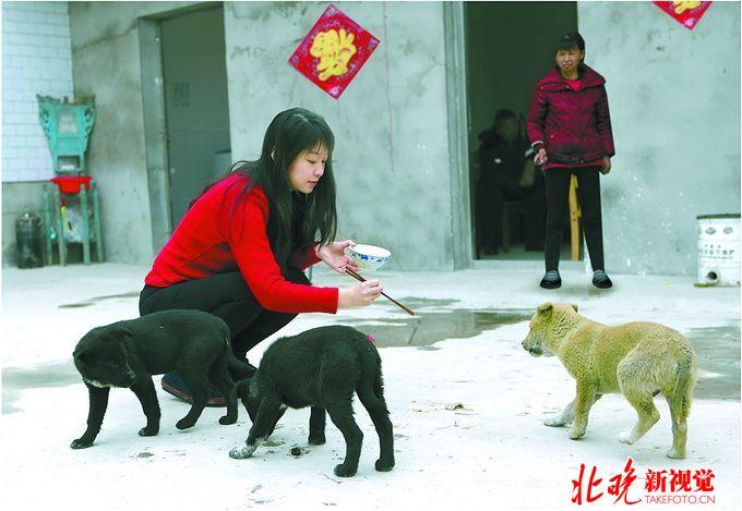 非常喜欢小动物,大年初一早上,她就来到院子里,给家中饲养的小狗喂食.