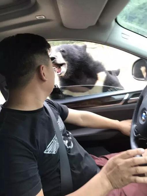 终于摆脱了黑熊的追击,陈先生停下车,紧闭车窗,等待工作人员的到来。不一会儿,一辆吉普车驶来。陈先生将刚才自己的经历告诉了对方,向他们求助,但让他意外的是,他等到的是各种教育。 我承认擅自开窗确实有错,但是,当时我忍着痛和恐惧,恳求工作人员告诉我该怎么办,他们就说了句自己去医院,听到这话,我心都凉了。 想到门票上印有求助电话,陈先生尝试着打了过去,一位女士接的。工作人员同样以教育的语气对他进行了批评,随后表示可到游客中心进行简单包扎处理,并要自己拨打保险公司电话。由于动物园里都是弯曲的山路,驶出只能按照