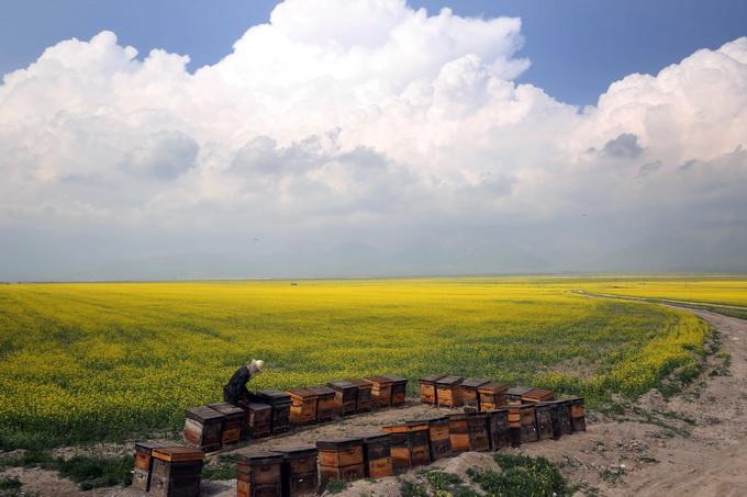 官方授权平台:专访青海省委副书记省长王建军_以循环经济推进绿色发展