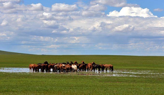 锡林郭勒草原旅游季下月启动 北京五环向北驱车300公里即达