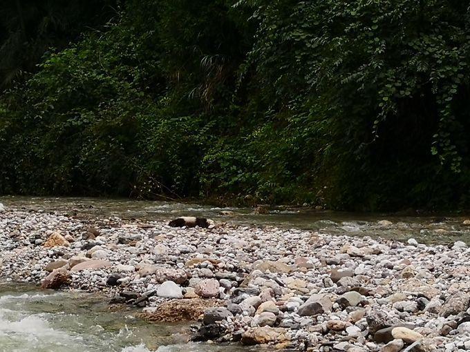 皇家彩票网官方网站:四川发现疑似暴雨后溺亡大熊猫幼仔