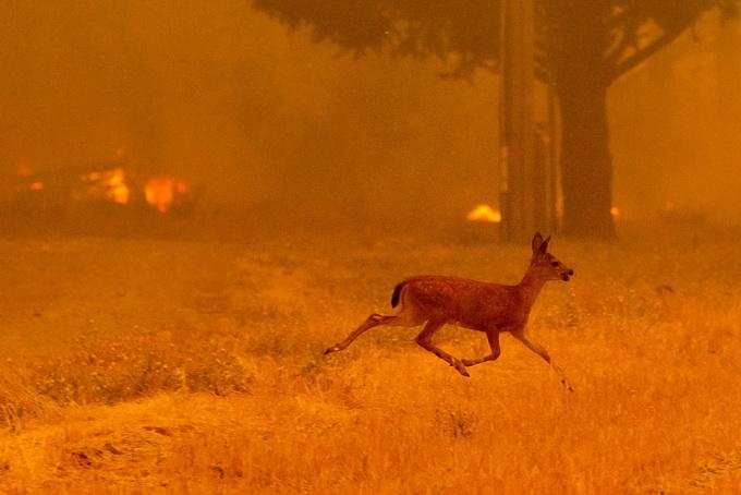 网上买彩票恢复了吗:山火肆虐延烧数星期__美国加州向联邦政府求援灭火