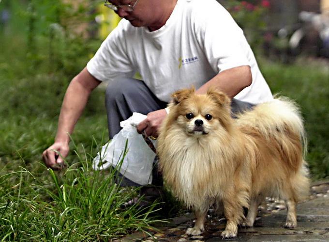 如何科学环保地处理宠物的粪便?