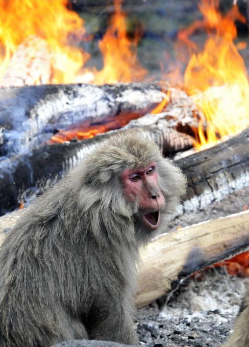 古代志怪多见猿猴盗妇故事 猿猴盗妇完整故事