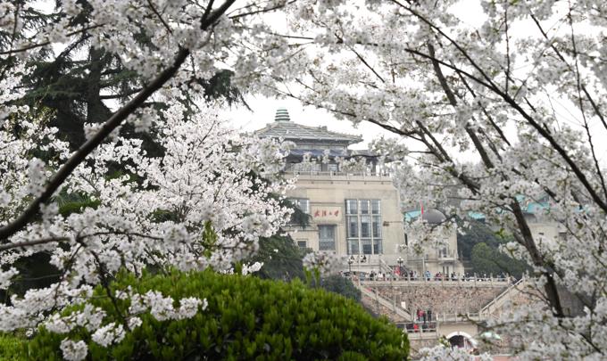 真实大自然风景图片樱花