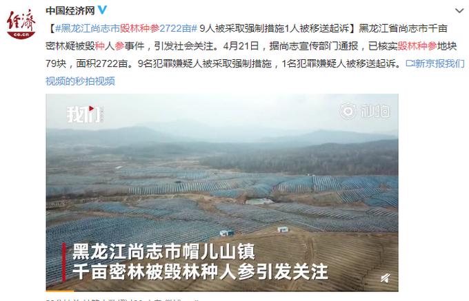 """黑龙江尚志2722亩地""""毁林种参"""""""