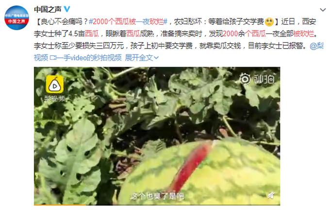 2000个西瓜被砍烂是怎么一回事?事情经过是怎样的?真相是什么?