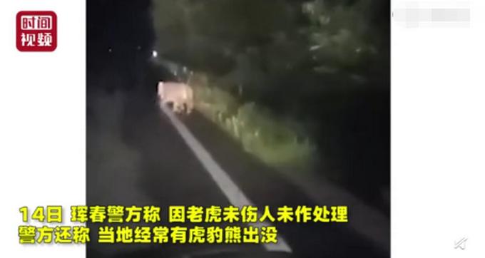 东北虎横穿马路与市民对视,安静离开网友大开脑洞:你瞅啥?