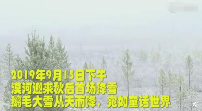 黑龙江漠河下雪,叶子上堆满雪球,游客收获秋日里的惊喜