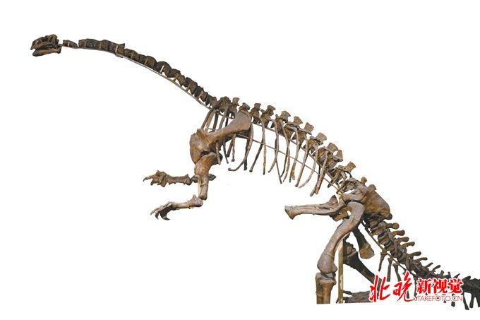 中国古动物馆展出90件珍贵标本,我们是如何从鱼变成人的?