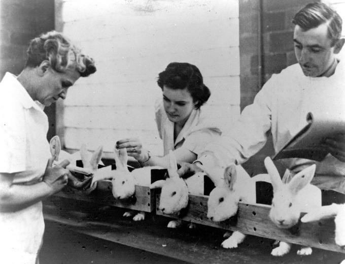 一筹莫展_第二次世界大战时期,全美国的青霉素库存仅够治疗两个病人 ...